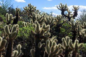 12 Reasons You Should Retire in Arizona